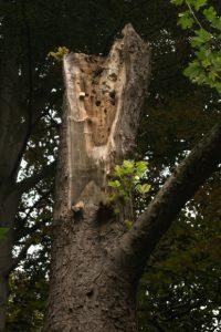 Abgestorbener Baum im Vieburger Gehölz