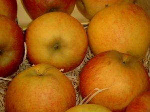 Apfel (Malus) 'Elstar'