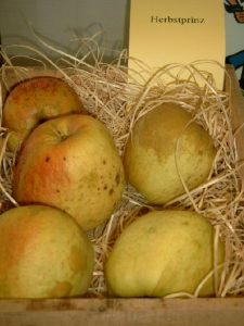 Apfel (Malus) 'Finkenwerder Herbstprinz'
