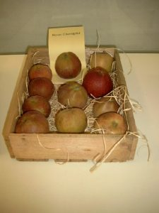 Apfel (Malus) 'Roter Eiserapfel'