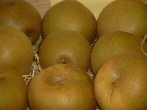 Apfel (Malus) 'Zabergäu Renette'