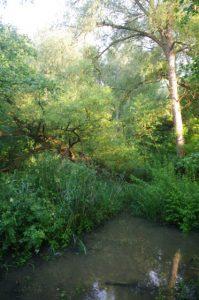 Artenreiche Gehölz- und Krautflora am Langsee