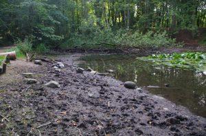 Austrocknender Teich im Vieburger Gehölz