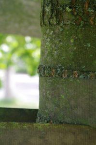 Einschnürung durch Kunststoff-Baumbindung