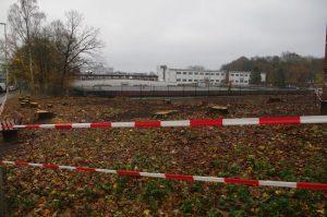 Grünflächenzerstörung in Gaarden: Eichenfällungen in der Elisabethstraße