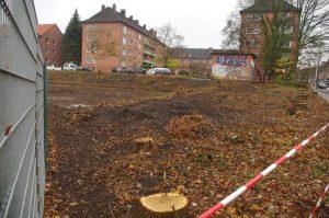 Grünflächenzerstörung in Kiel-Gaarden: Eichenfällungen in der Elisabethstraße
