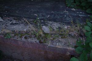 Hausverfall mit Pioniervegetation - Haus 3 im Anscharpark