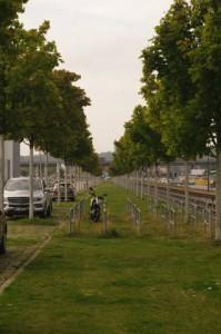Sterbende Ahorne an der Kieler Hörn. Sämtliche der an der Kieler Hörn gepflanzten Großbäume sind sterbenskrank