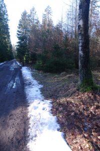 Letzter Schnee auf Wanderweg im Segeberger Forst