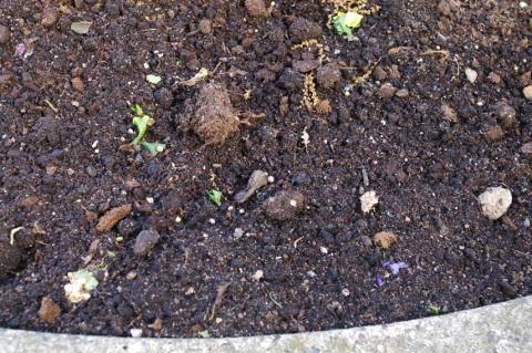 Torf und Kunstdünger als Substrat für Sommerblumenpflanzung