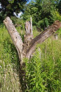 Totholz im Kleingarten