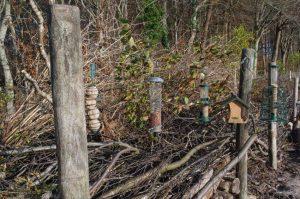 Vogelfutterstelle an Totholzhecke mit locker aufgeschichteten Dornensträuchern