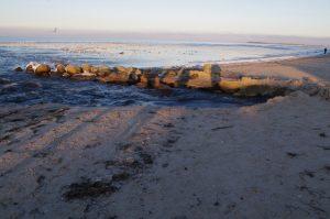 Wasserschaden führt zu Erosion am Strand - den Möwen gefällt es