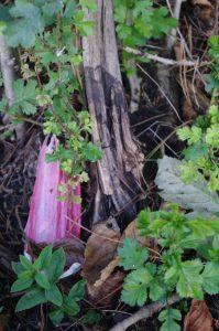 Zersetzung: Totholz und Plastik