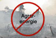 Rodung für Agrosprit - Nein Danke!