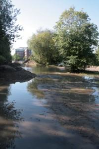 Kiel: Zentralbad-Fläche würde wichtiges Biotop zerstören