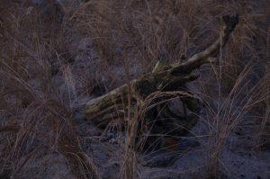 Totholz als Gestaltungselement in Dünenbeet